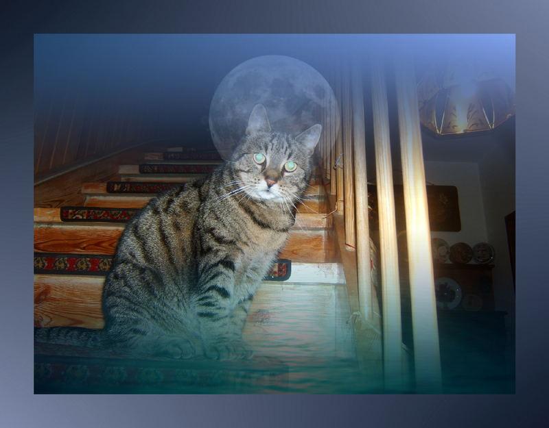 Was träumen die Katzen?