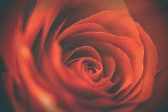 Was uns Rose heißt