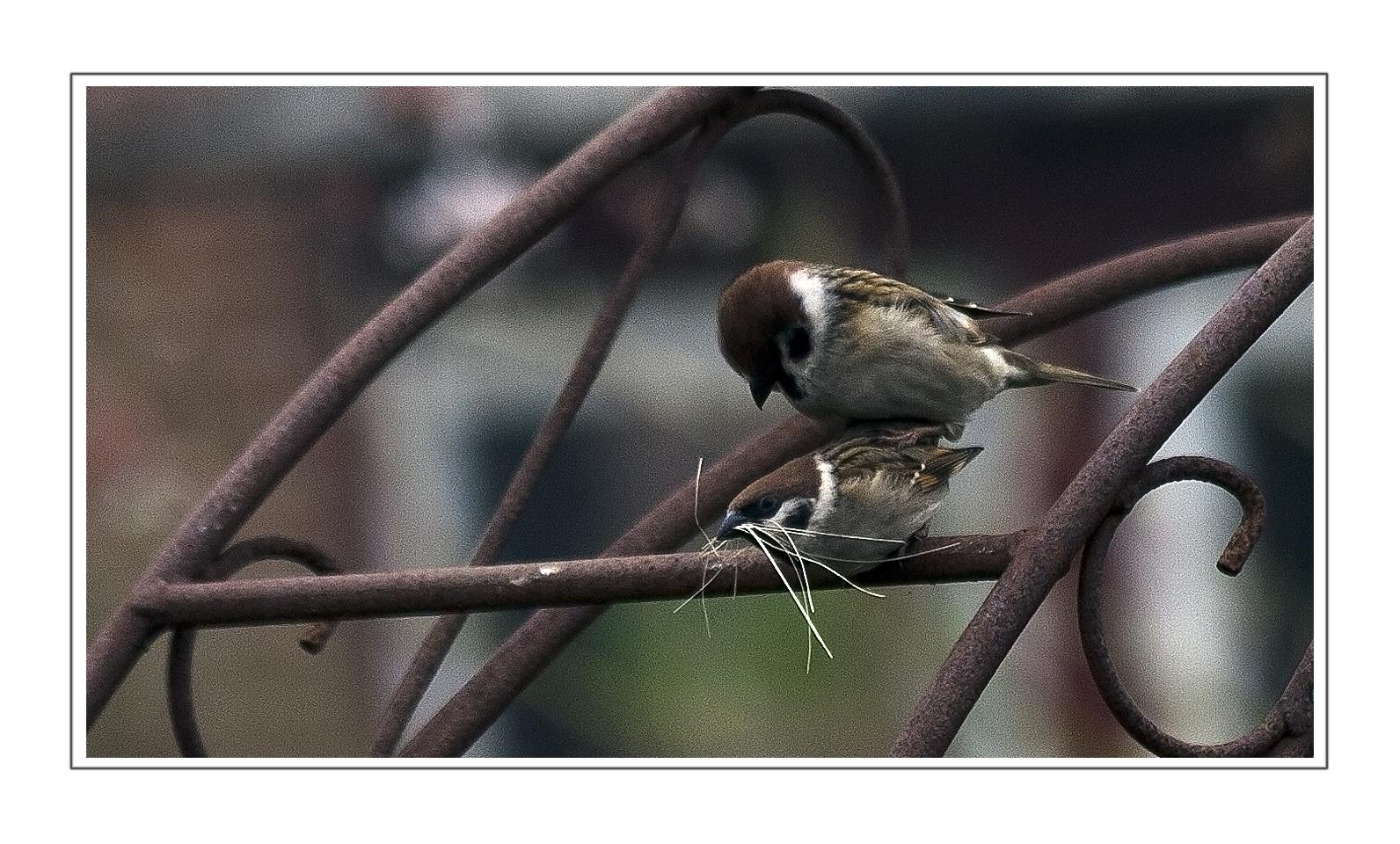 ...was Vögel alles so machen...