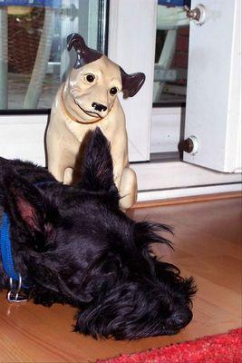 Was will der fremde Hund hier !