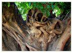 Was wohl der Baum erzählt ?