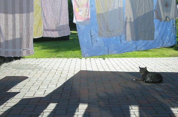 Waschtag mit Katze