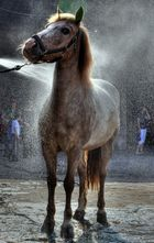 Wash Horse