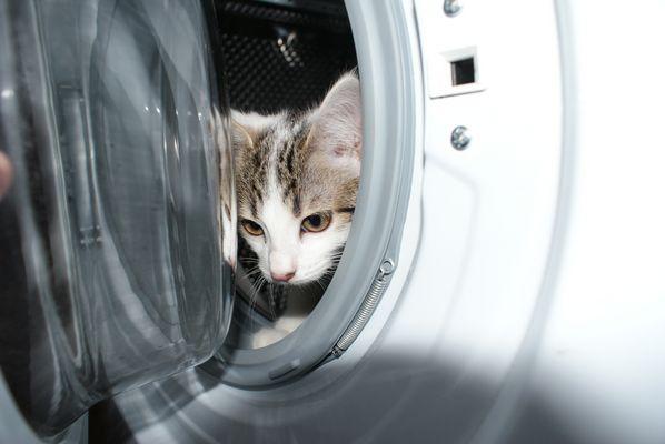 Washing dream !