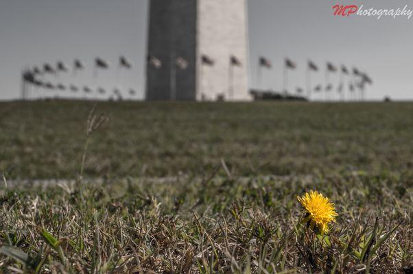 Washington Monument -DC