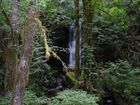 Washington Rainforest