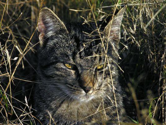 Wasja, der junge Tiger