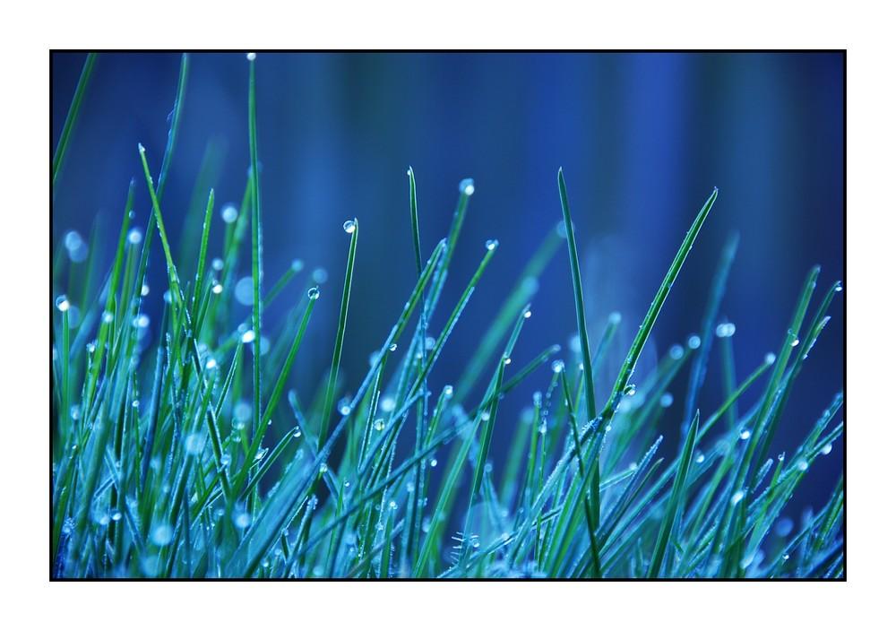 Wasser am Gras