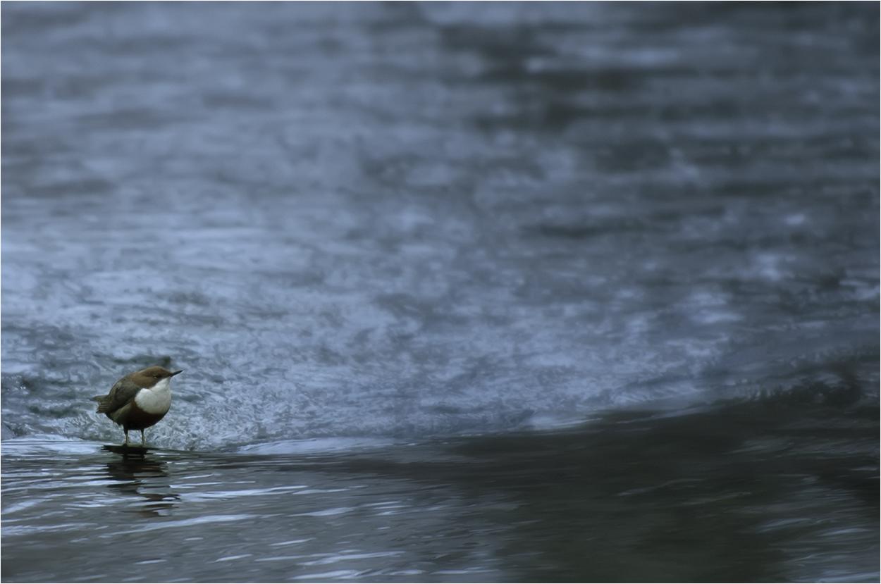 Wasser …..