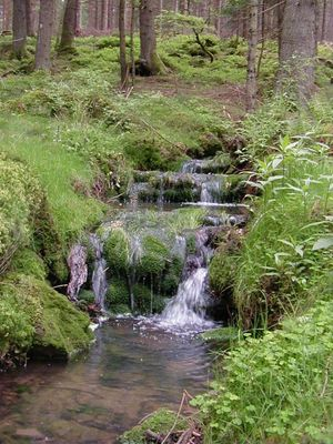 Wasser, die Quelle des Lebens