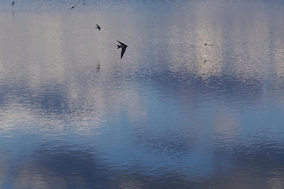 Wasser, Himmel, Schwalben