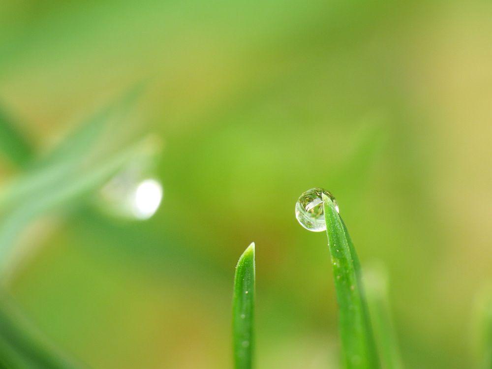 Wasser im Gras