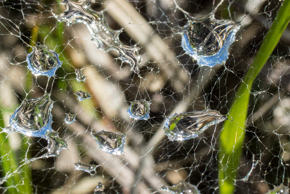Wasser im Netz