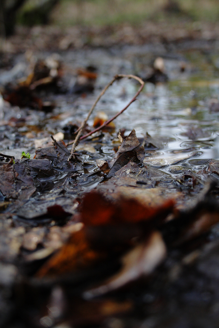 Wasser im Wald.