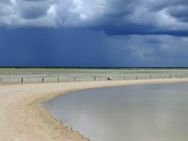Wasser in der Etosha (P)