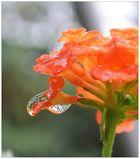 ...wasser-orange...