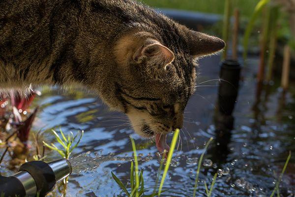 Wasser schlabbern