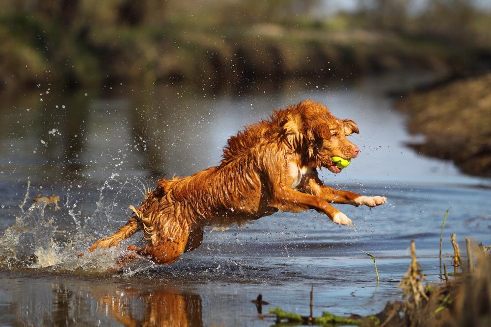 Wasser und Energie !