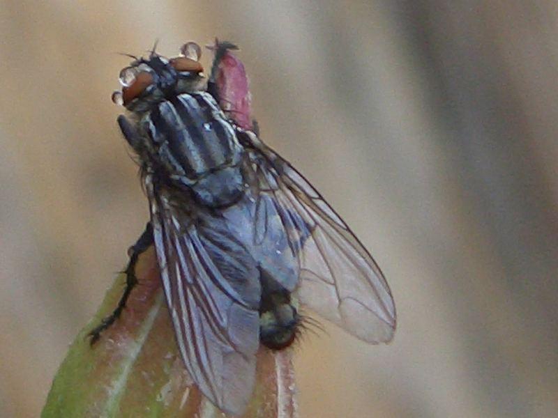 wasser und Fliege