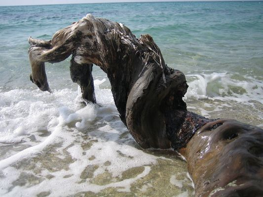 Wasser und Holz...