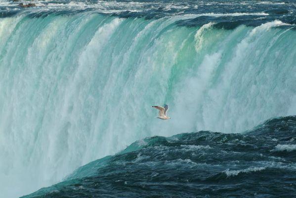 Wasser-Vogel