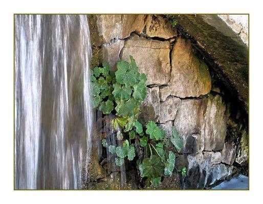 Wasser-Vorhang
