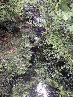 Wasser Wald Spiegelungen