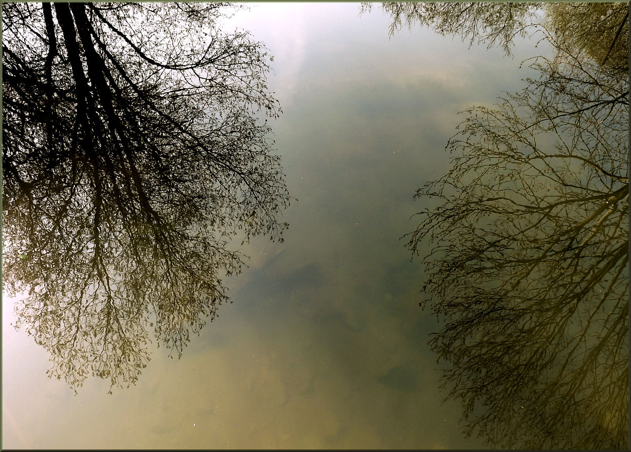 Wasserbäume