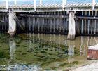 Wasserfäden