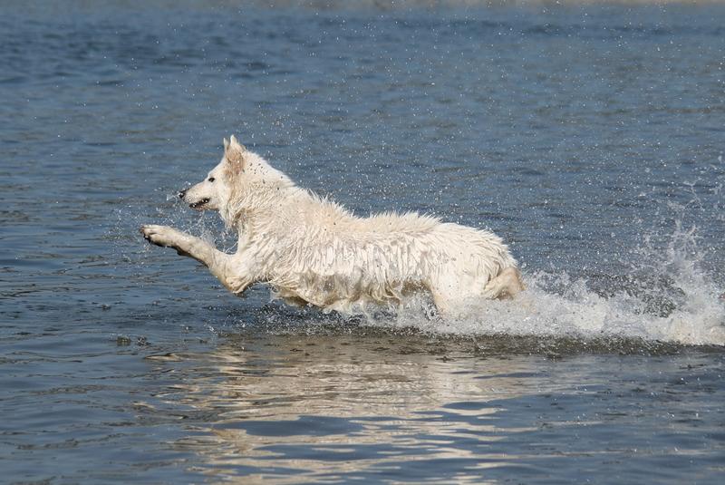 Wasserflughund Dahra