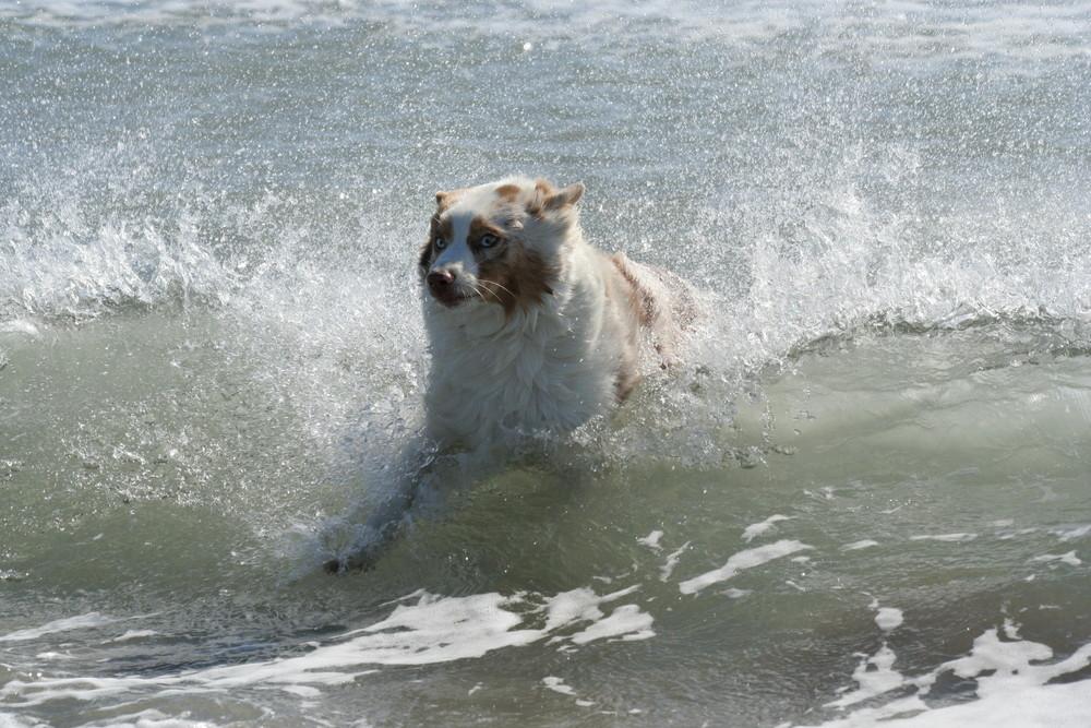 Wasserfreude---