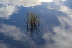 Wassergras