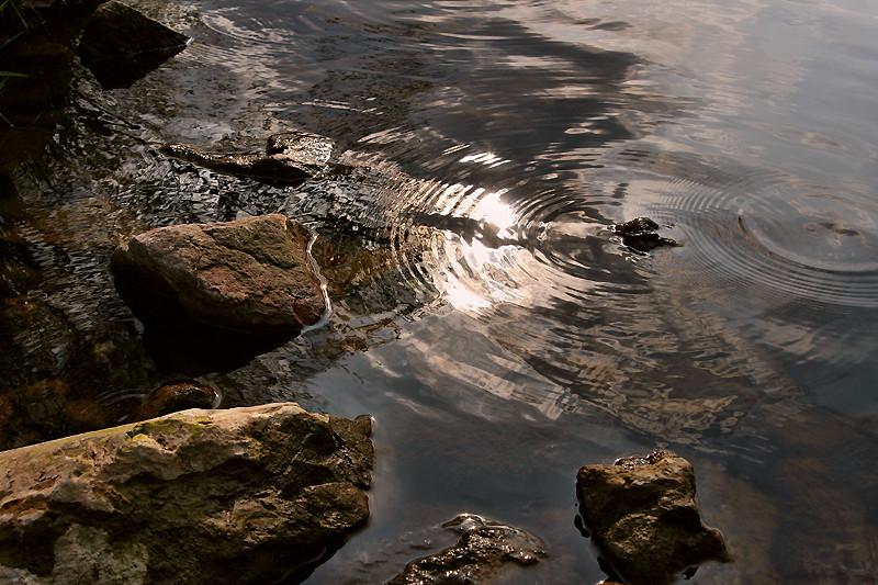 Wasserkreise