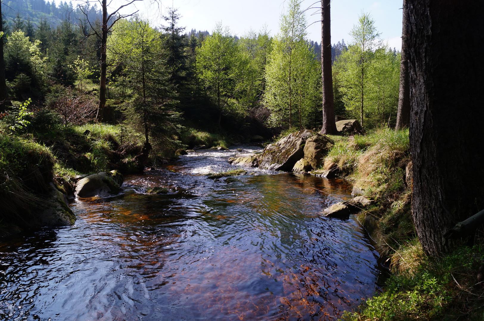 Wasserlauf im Harz