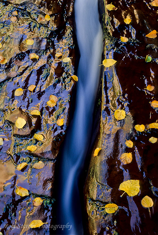 Wasserlauf im Zion N.P