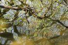 Wasserlicht-Impression im Frühling