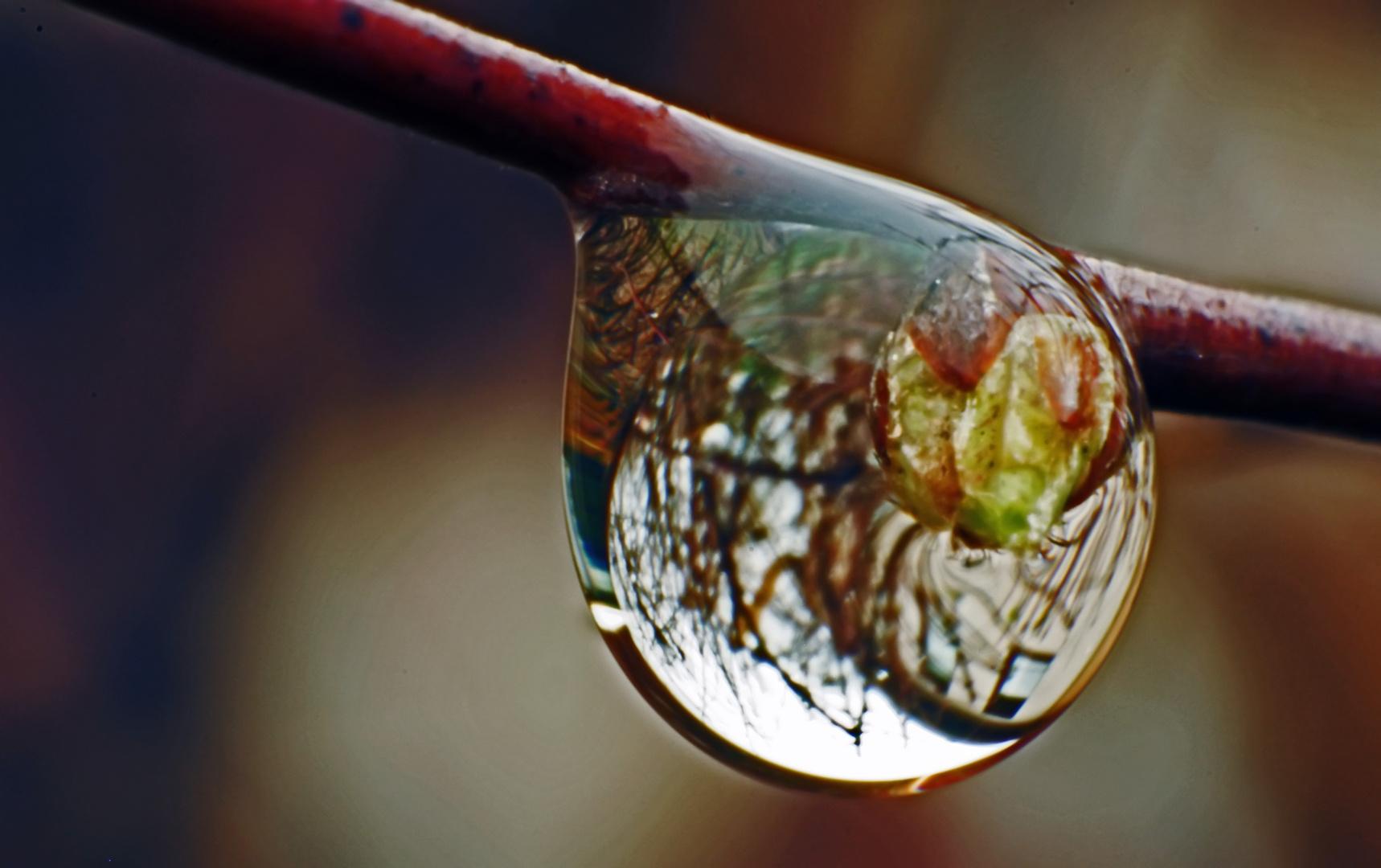 Wasserlinse