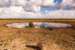 Wasserloch Etosha NP - Namibia