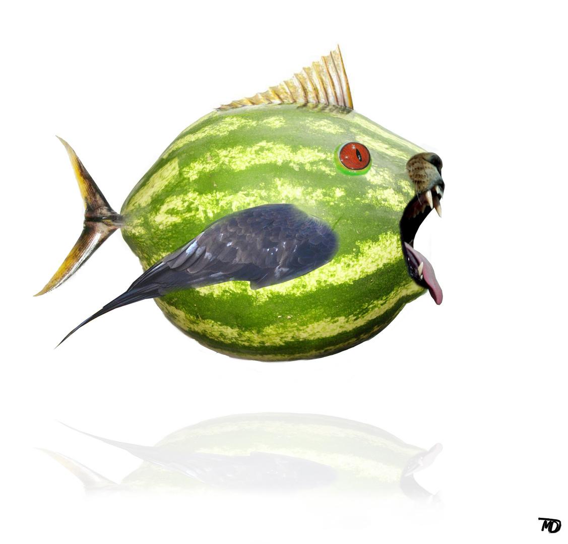 Wasserlöwadlethunfisch