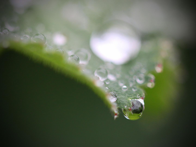 Wasserperle...