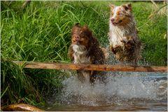 Wasserratten