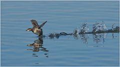 Wasserrennen