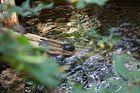 Wasserschildkröten in der Biosphäre Potsdam