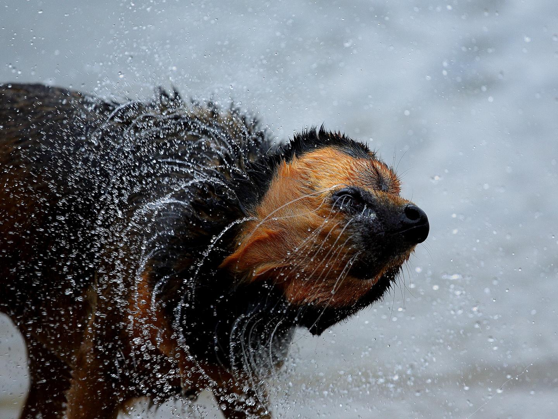 Wasserschleuder
