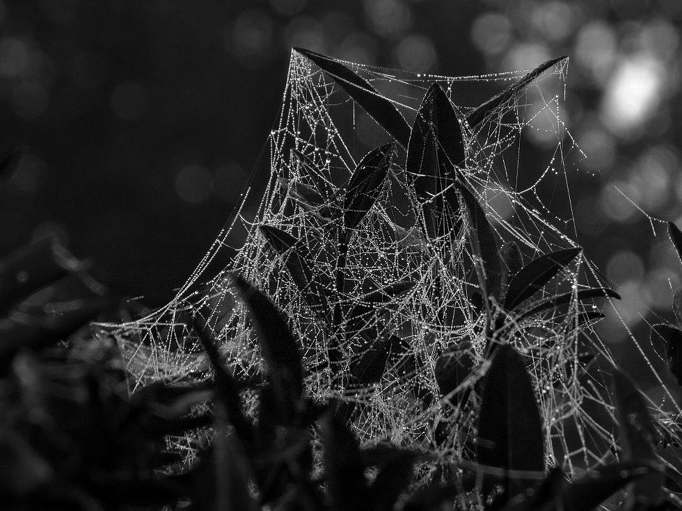 Wasserschloß für Spinnen
