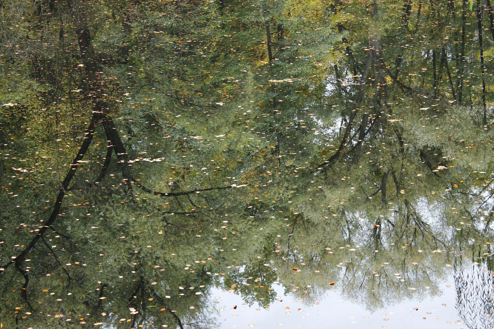 Wasserspiegelung in der Rehberge-Berlin