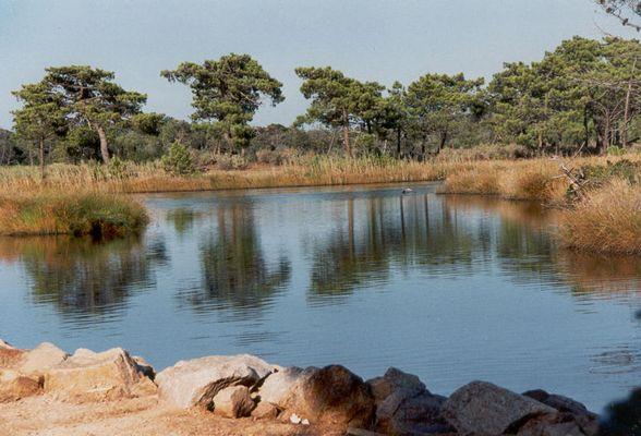 Wasserspiegelung-Korsika
