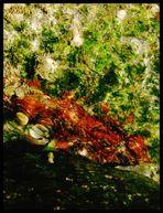 Wasserspiel 3: Monets Algen
