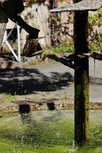 Wasserspiele oder moderne Brunnen in der Stadt