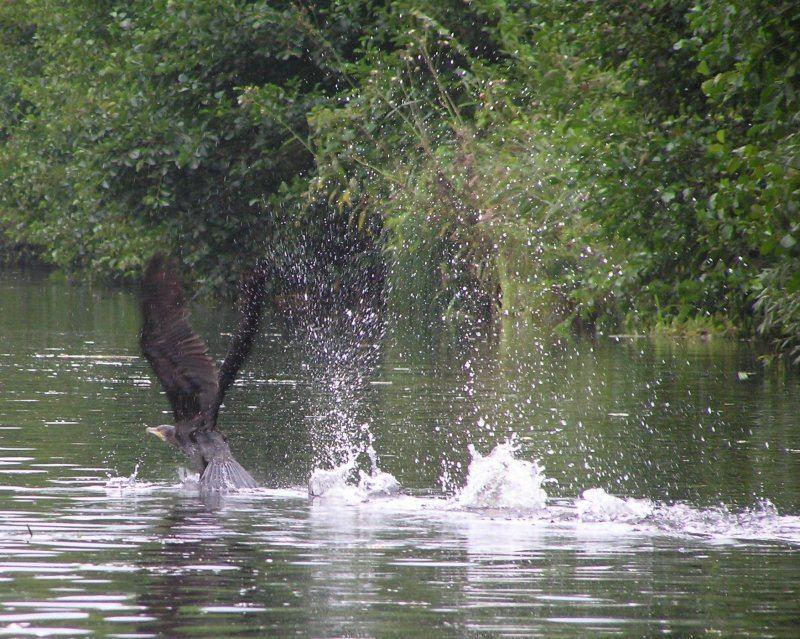 Wasserstart